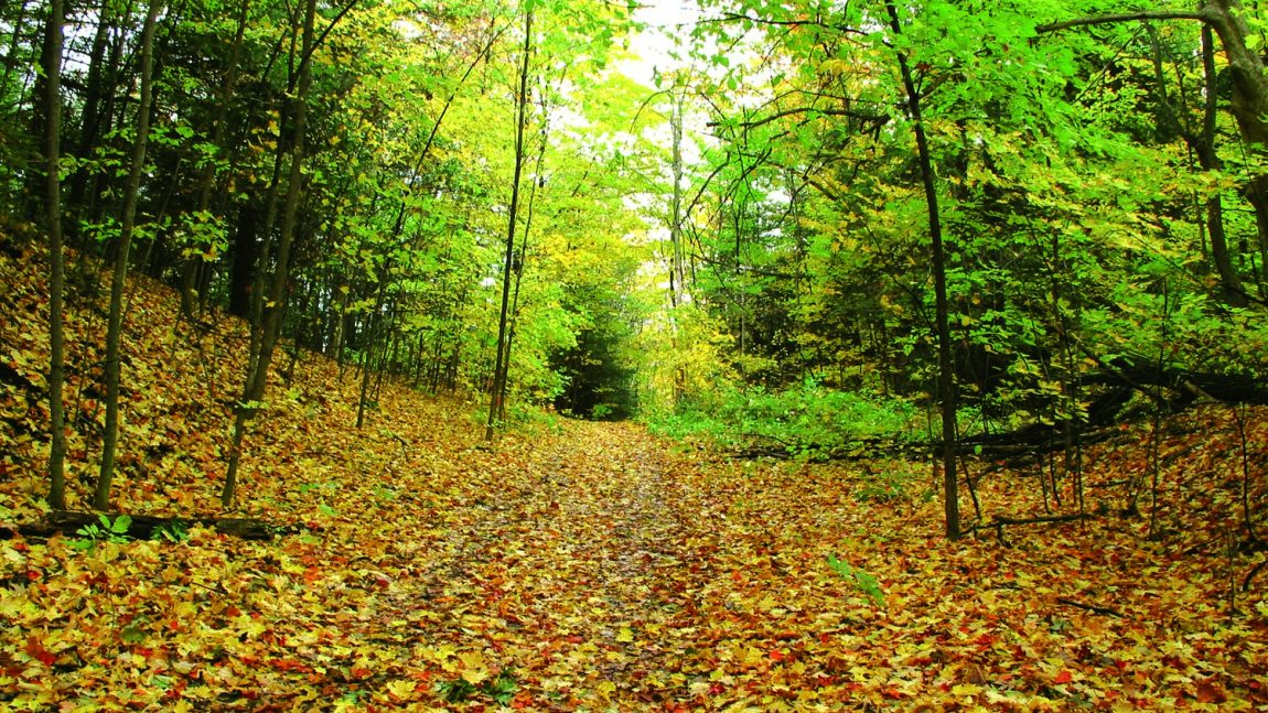Southern Ontario's Disappearing Forest