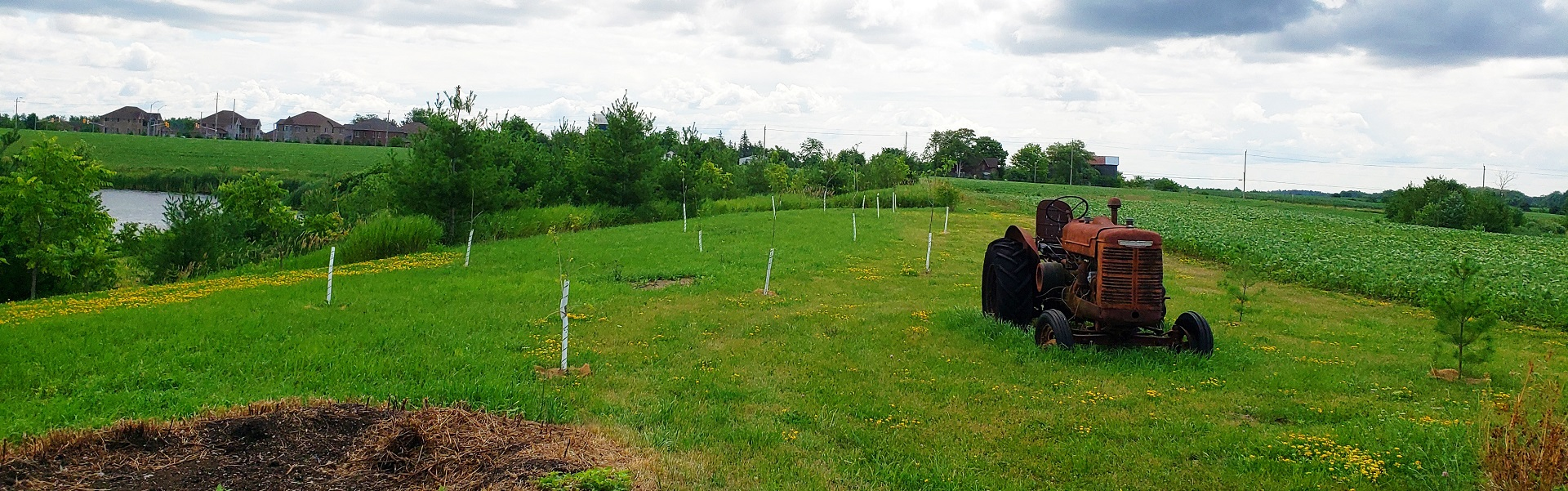 Green Infrastructure Ontario Services