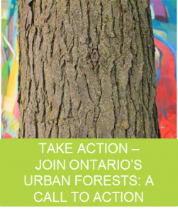 Urban Forests Call to Action